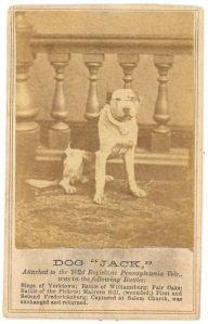 Civil War Dogs- Dog Jack