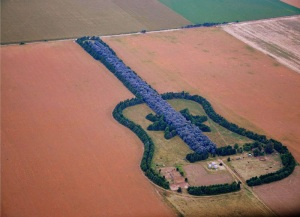 man-plants-guitar-shaped-forest-for-wife-in-pampas-argentina-5