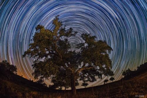 North Celstial Tree-- JeronimoLosada