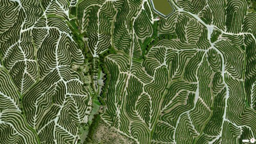 Daily Overview vineyards-in-huelva-spain-from-above-aerial-satellite