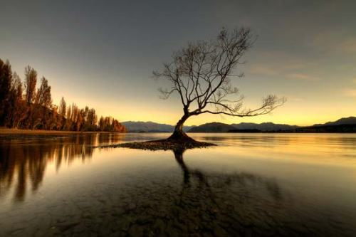 lake-wanaka-nz-lone-tree-2