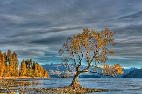 lake-wanaka-nz-lone-tree-3