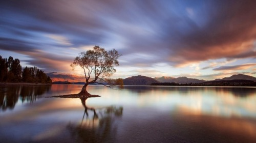 lake-wanaka-nz-lone-tree-4