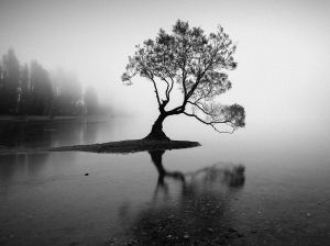 lake-wanaka-nz-lone-tree-5-bw