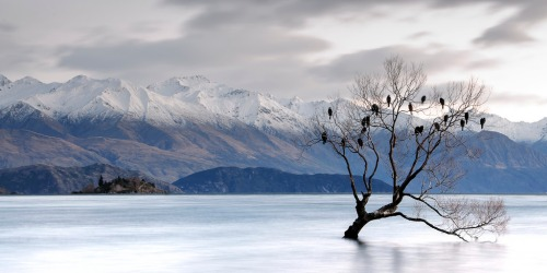 lake-wanaka-nz-lone-tree-6