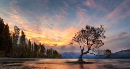 lake-wanaka-nz-lone-tree-7